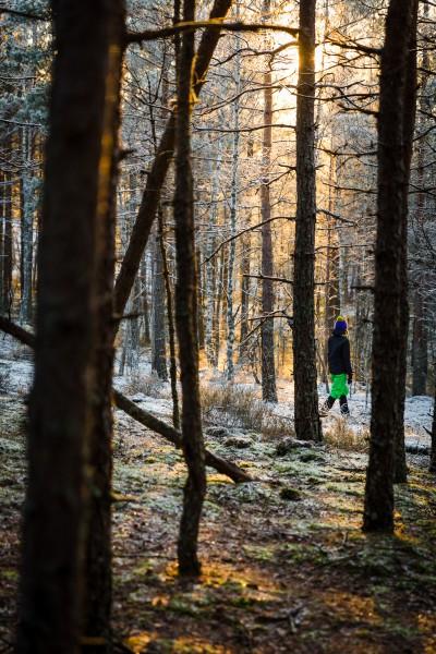 Meža miers Garkalnes mežos.