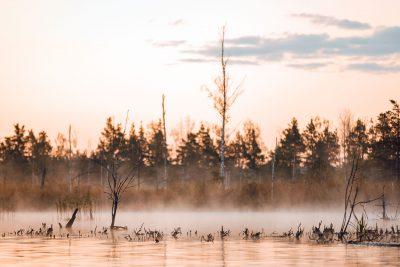 Saullēkta brauciens ar SUP dēli pa Ķemeru nacionālā parka ūdenstilpnēm, kad ar pirmo gaismu parādīs pirmie miglas vāli.